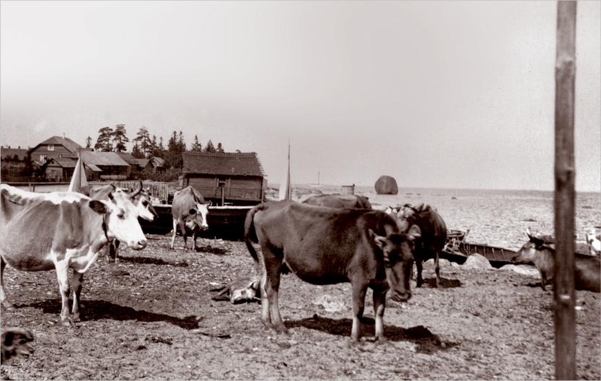Külakari Tõnikse all rannas, Lemeti kivi Allikas: Aarne Vaigu erakogu