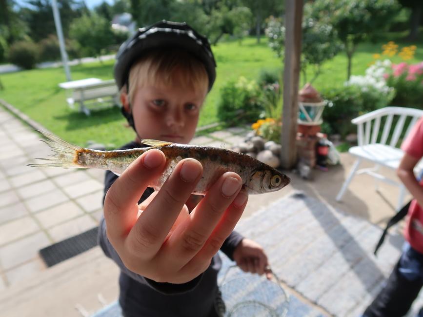 Püüdjast suurem kala NOOR KALUR 2020