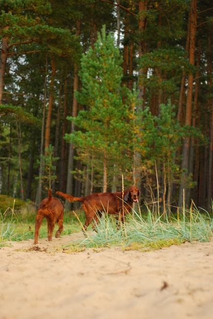 Puna, Roosa, september, 2012 Allikas: Aarne Vaigu erakogu, foto: Ann Vool