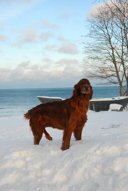 Puna, detsember, 2012 Allikas: Aarne Vaigu erakogu, foto: Ann Vool