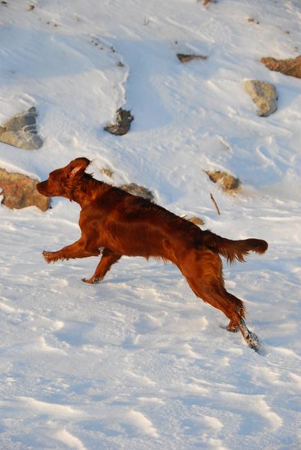 Roosa, detsember 2012 Allikas: Aarne Vaigu erakogu, foto: Ann Vool
