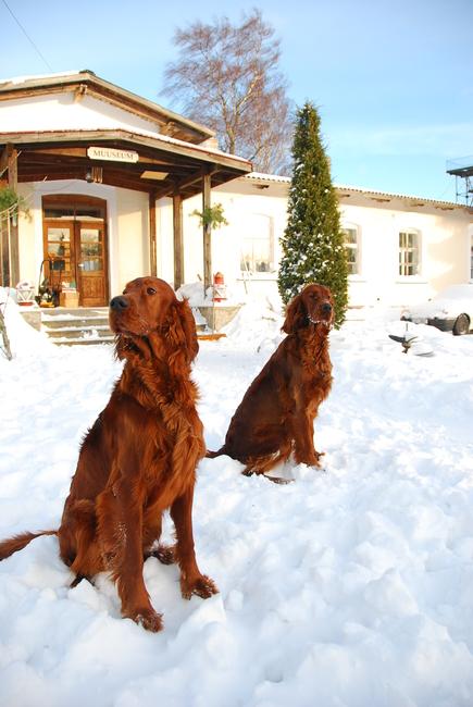 Puna ja Roosa, detsember 2012 Allikas: Aarne Vaigu erakogu, foto: Ann Vool