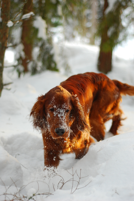 Roosa, detsember, 2012 Allikas: Aarne Vaigu erakogu, foto:Ann Vool