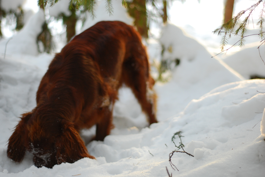 Puna, detsember, 2012 Allikas: Aarne Vaigu erakogu, foto:Ann Vool