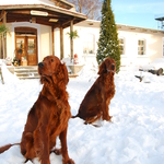 Puna ja Roosa, detsember 2012